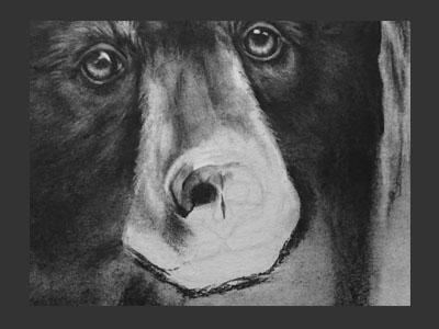 bear-who-nose-400-300